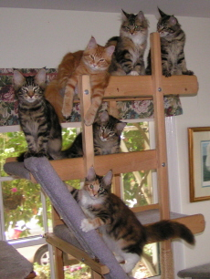 Cat tree and kittens November 2007